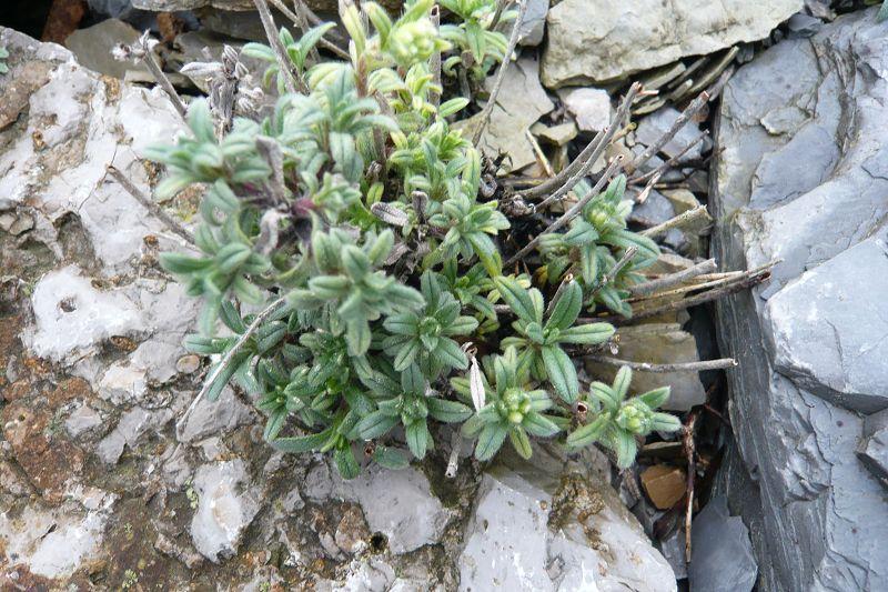 Jan u00b4s Pflanzenwelt ~ 14014347_Sukkulenten Ableger Pflanzen